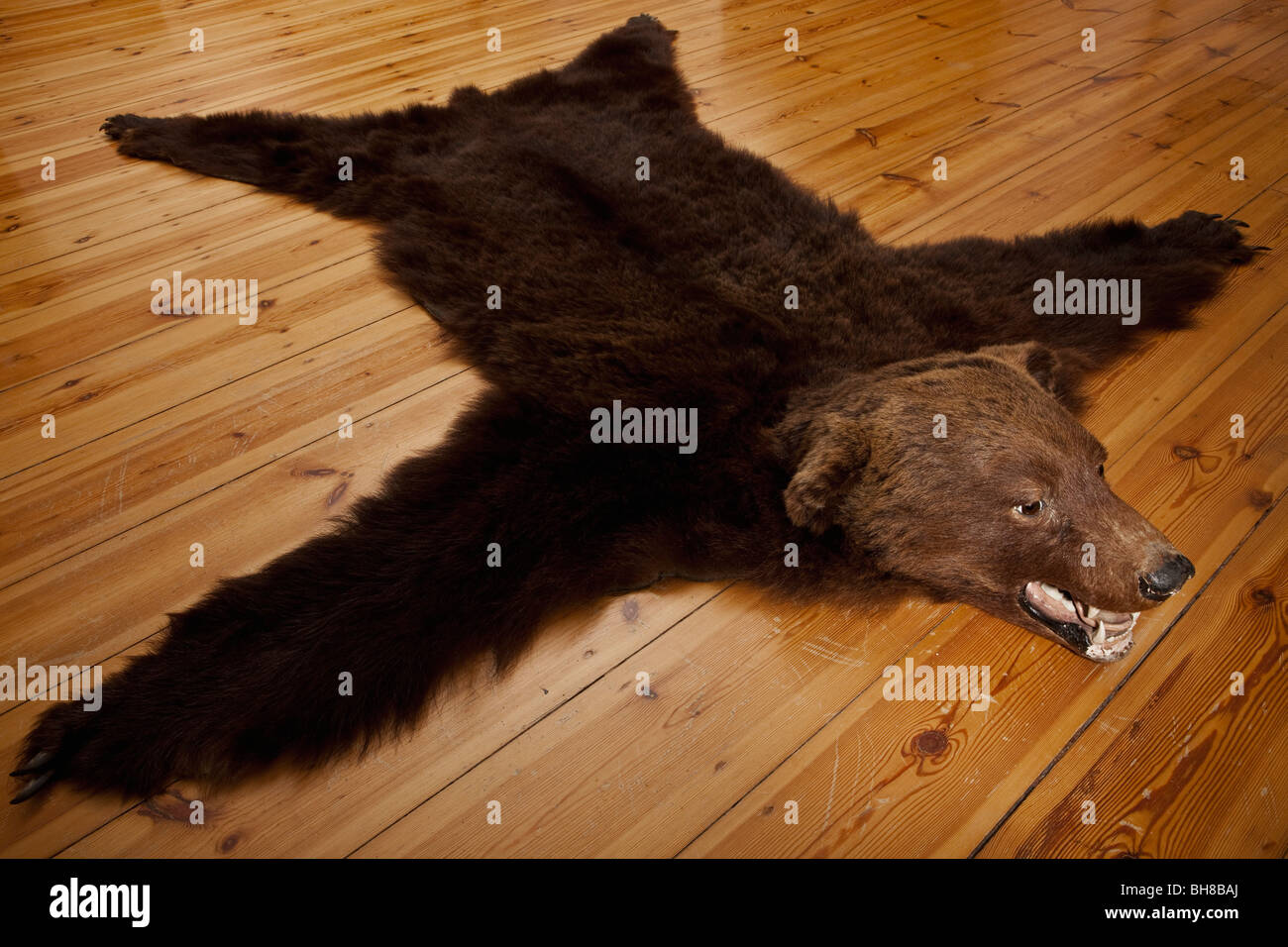 bear inspiration trend skin and for uncategorized then bearskin rug xf with fake tikspor astonishing polar head