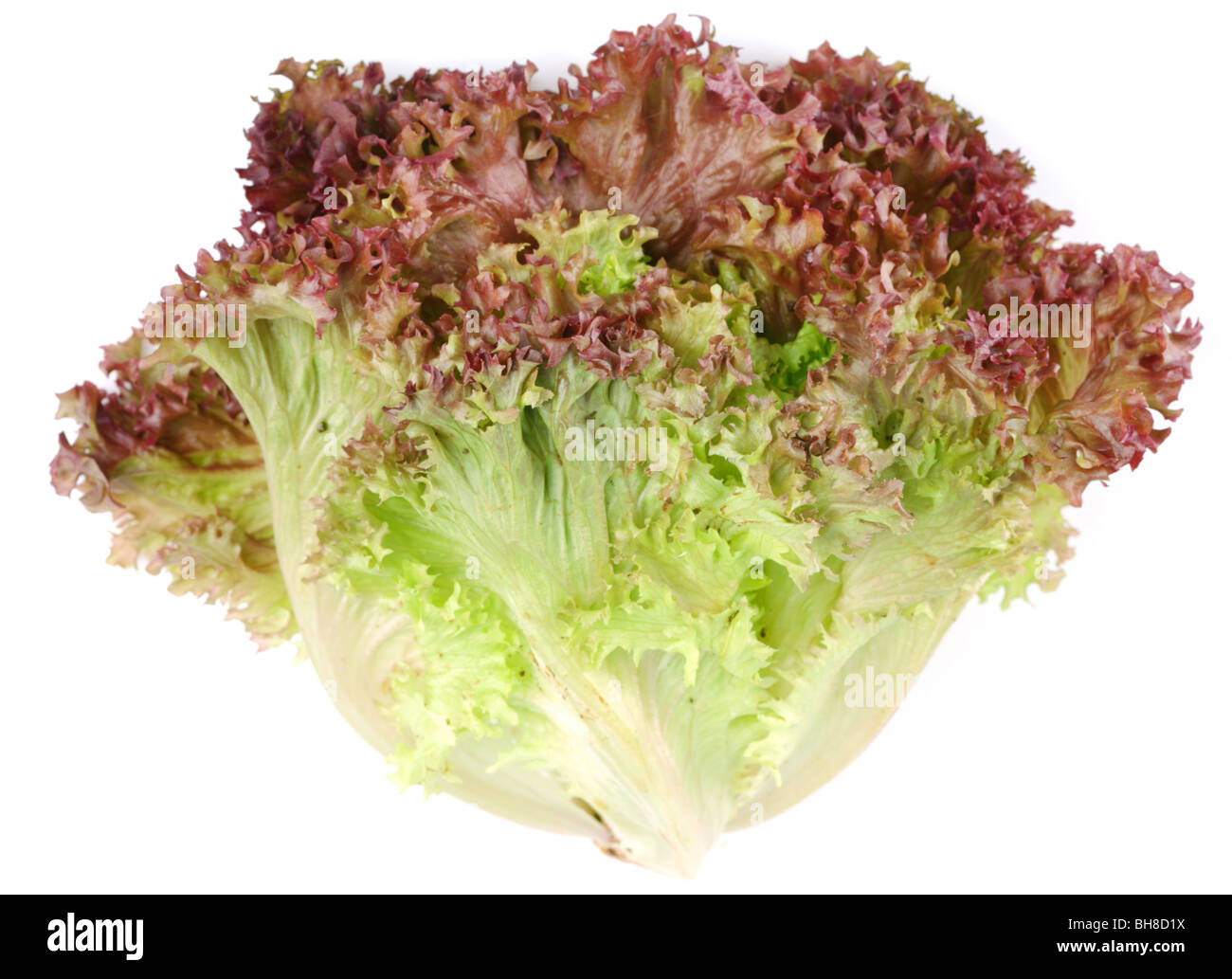 bunch lettuce leaves on a white background - Stock Image
