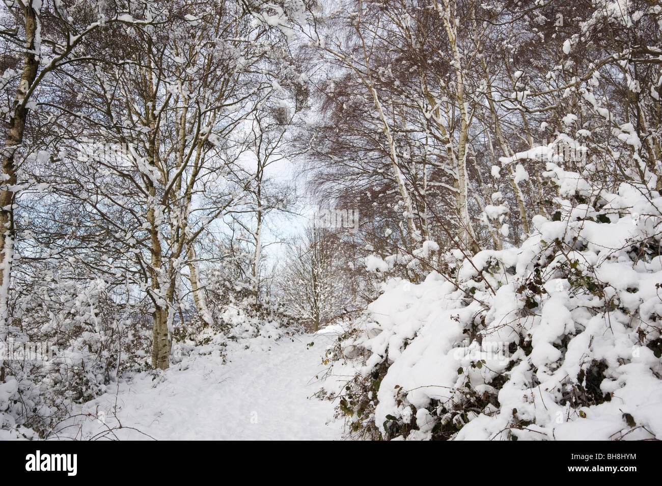 The Ridgeway Path in the Chilterns, Aston  Rowan Oxfordshire, UK after a snowstomr - Stock Image