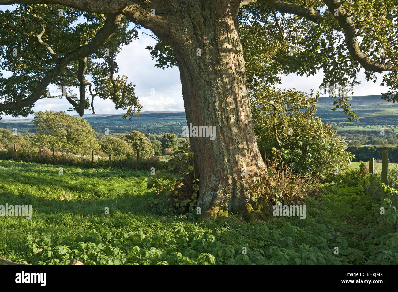 The ground of Bolton Castle, Wensleydale, North Yorkshire - Stock Image