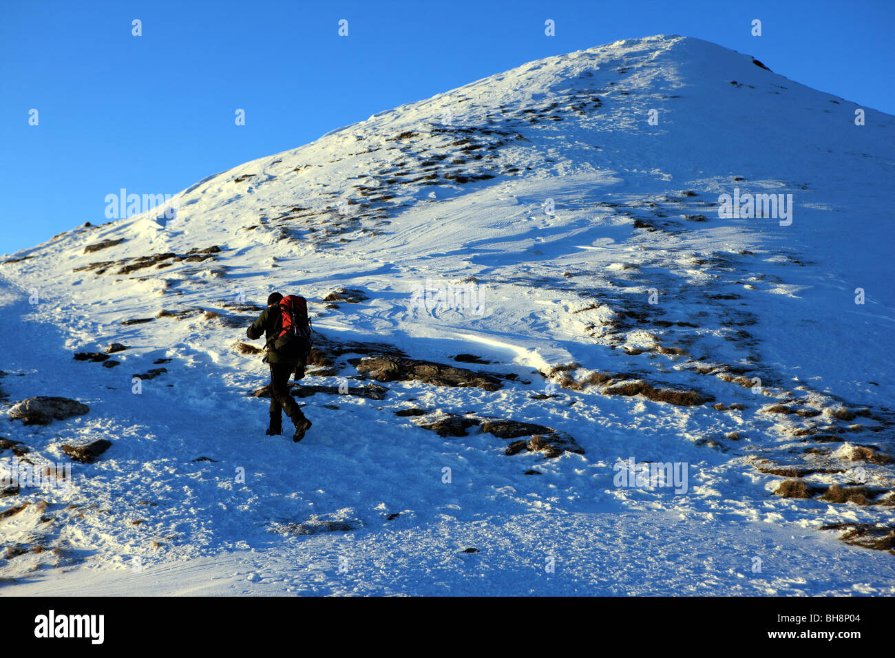 Walker on the final ascent to the summit of Ben Lomond - Stock Image