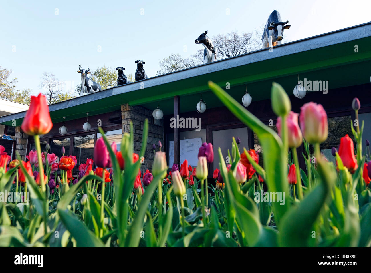 CowParade on the roof of Cafe Schoenbrunn, Friedrichshain Public Park, Berlin, Germany - Stock Image