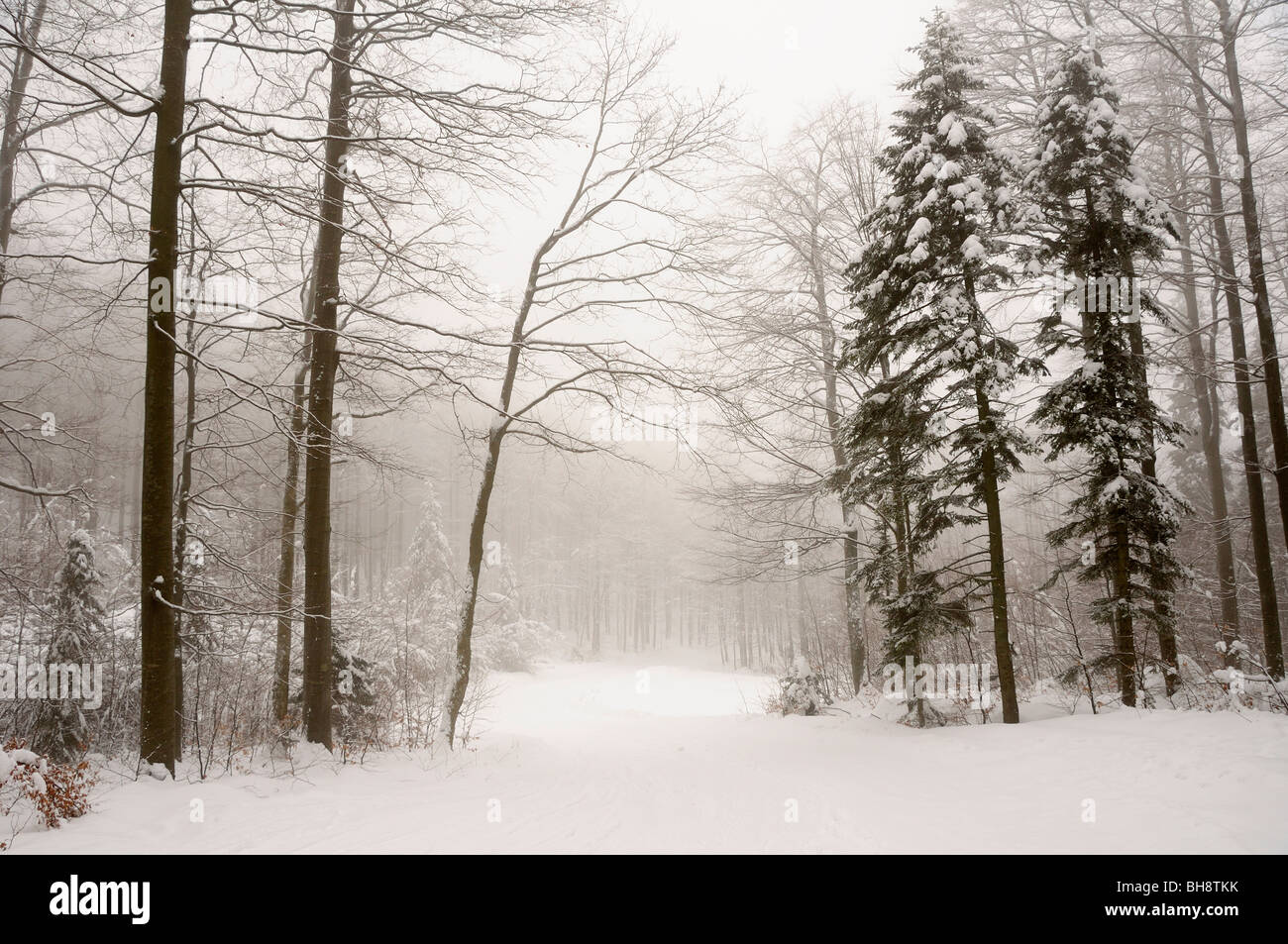 Winter in a forest of Gorski kotar, Croatia - Stock Image