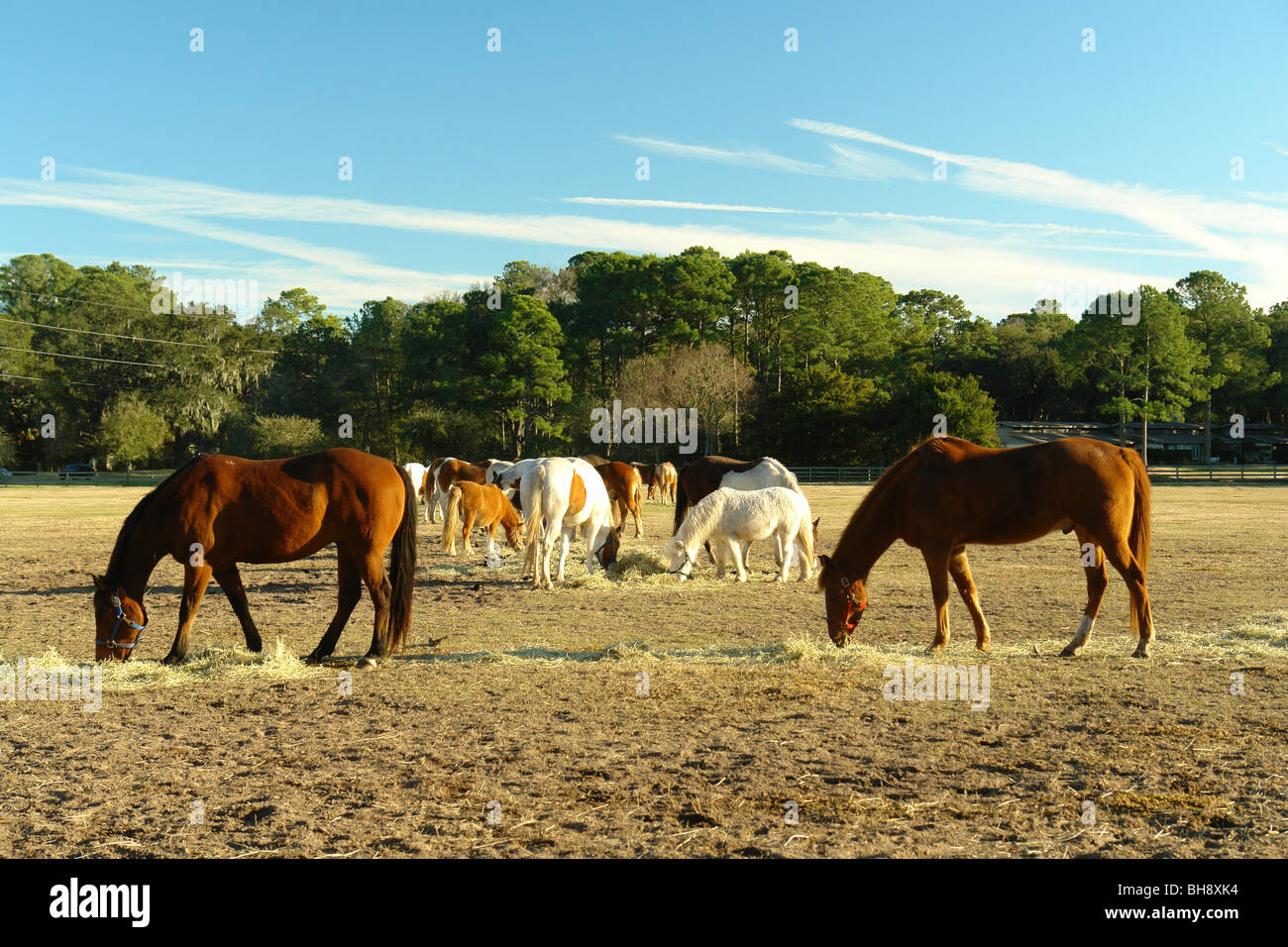 Island In South Carolina With Wild Horses