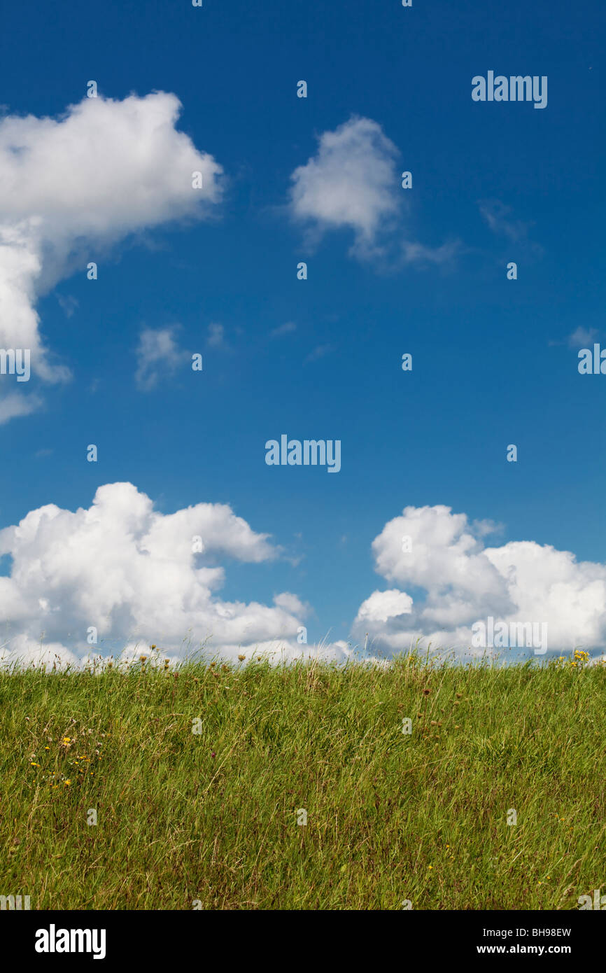 Low angle view of a field against a blue sky with fluffy clouds - Stock Image