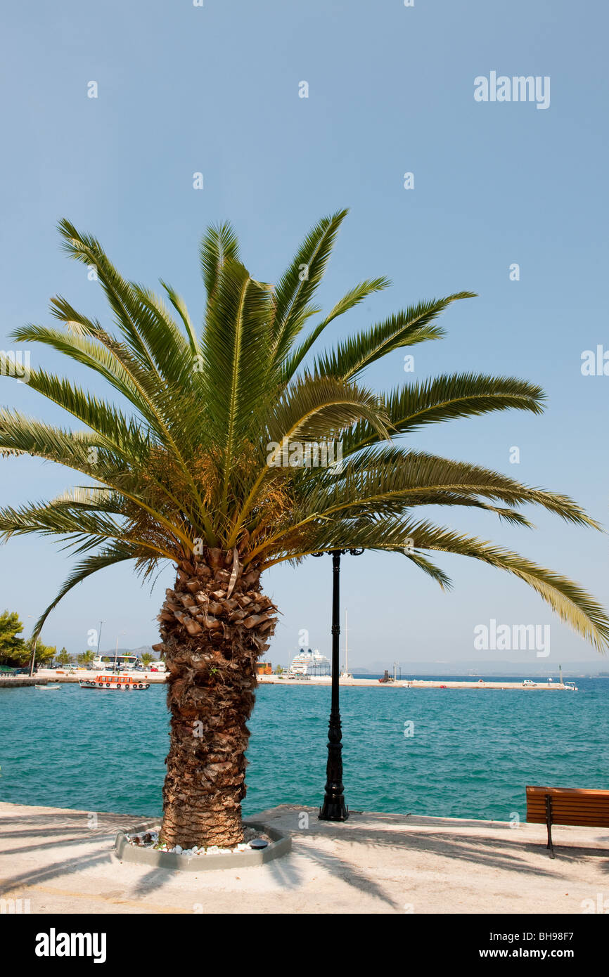 palmtree at the harbor of Pylos in Greece - Stock Image