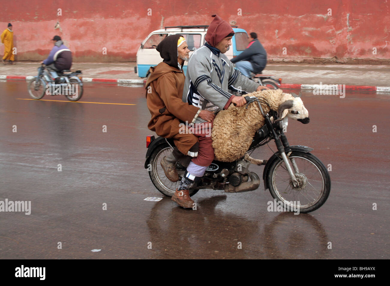 Two men and a sheep ride on a motorbike around Marrakesh streets few days before the Eid al-Adha - Stock Image