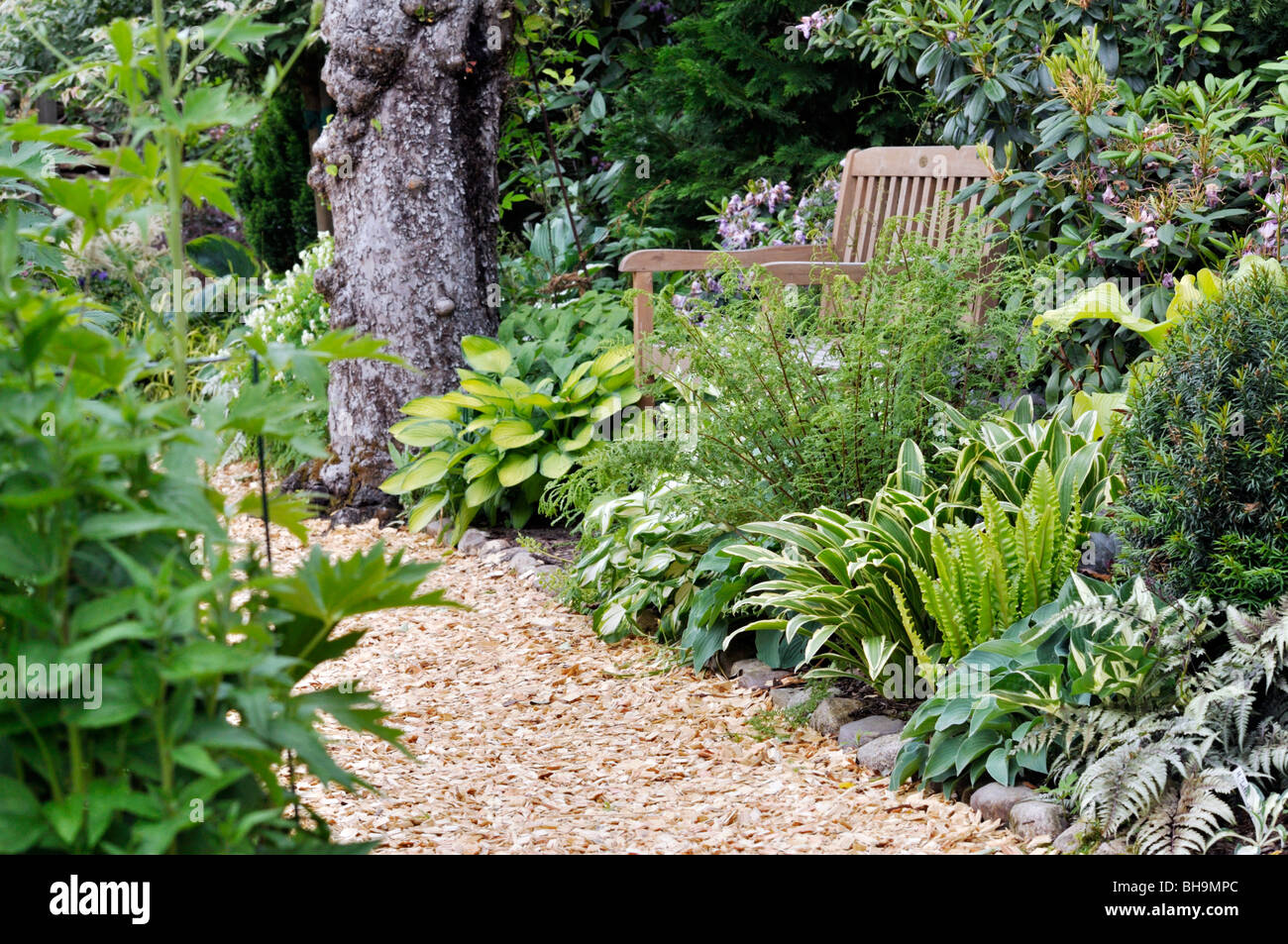 Garden Hostas Stock Photos & Garden Hostas Stock Images - Alamy on hosta and daylily garden, hosta and caladium garden, hosta garden plans blueprints, hosta and hydrangea garden,