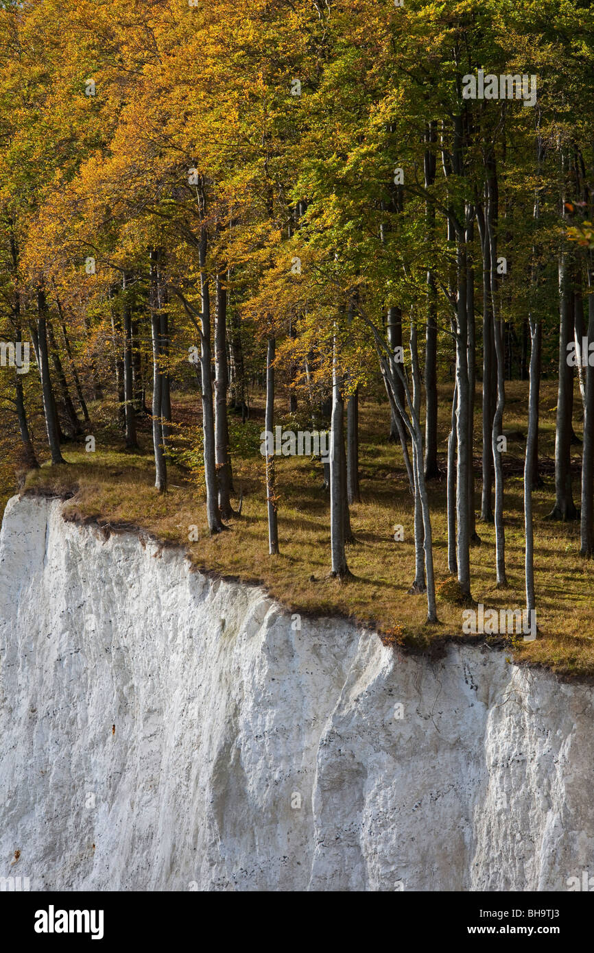 Trees in autumn colors at the edge of chalk cliff, chalk Jasmund National Park, island of Ruegen, Germany Stock Photo