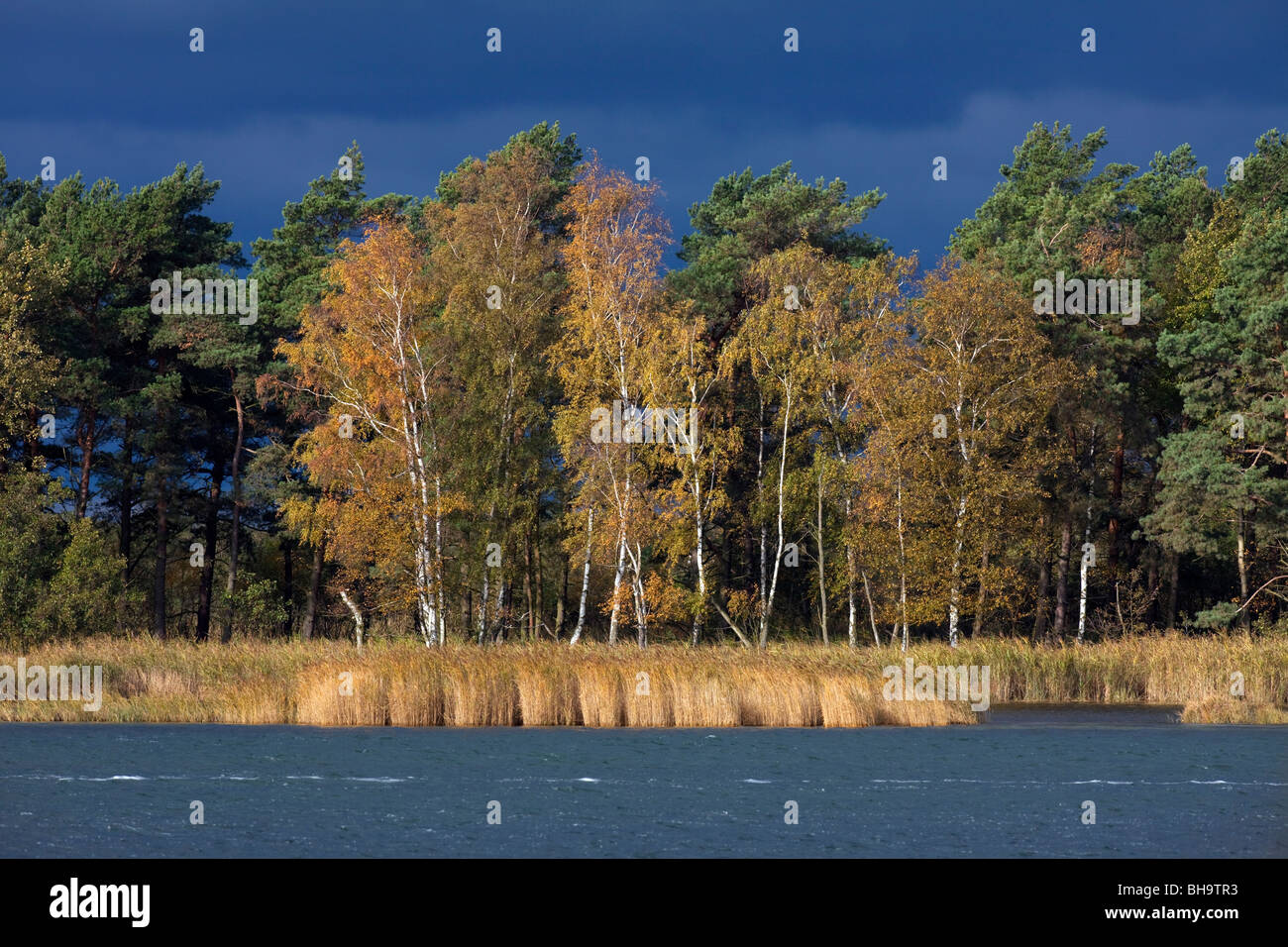 Island of Bock, Western Pomerania Lagoon Area National Park, Germany - Stock Image
