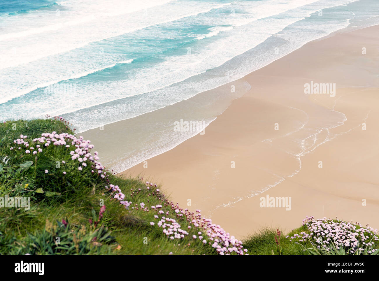 Waves roll onto clean deserted empty sandy summer beach from above. Sea pinks flowers in foreground. - Stock Image