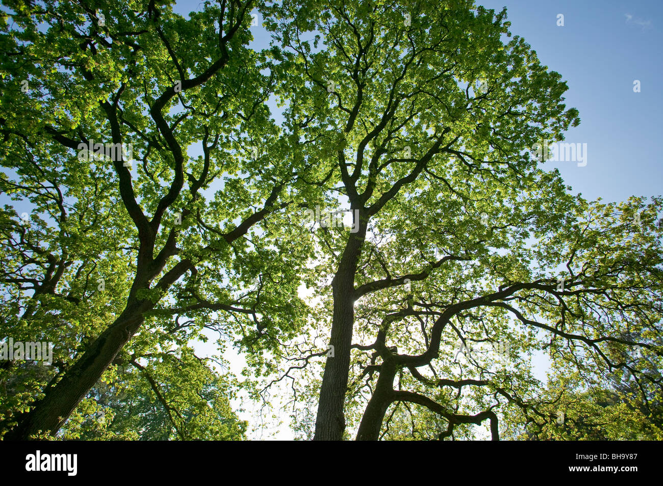 Trees in springtime, Parc de Bagatelle, Paris, France Stock Photo