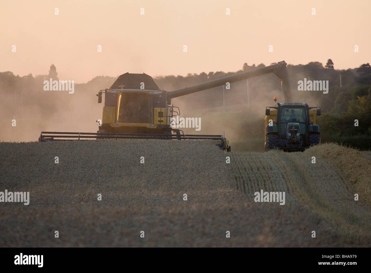 Combine Harvesting Wheat - Stock Image