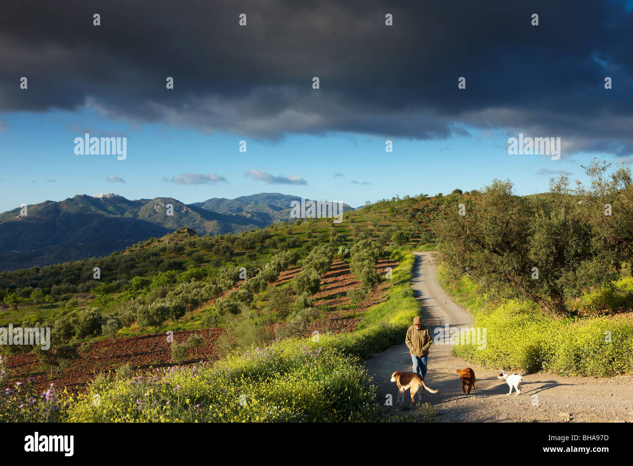 Andalucian workshop; Dave Waterman with his dogs nr Los Molinos, Periana, Andalucia, Spain - Stock Image