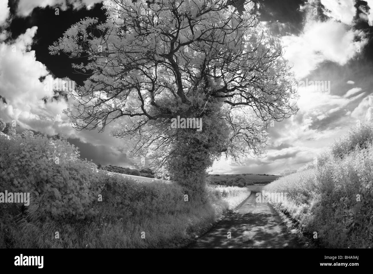 a country lane, nr Up Cerne, Dorset, England, UK - Stock Image