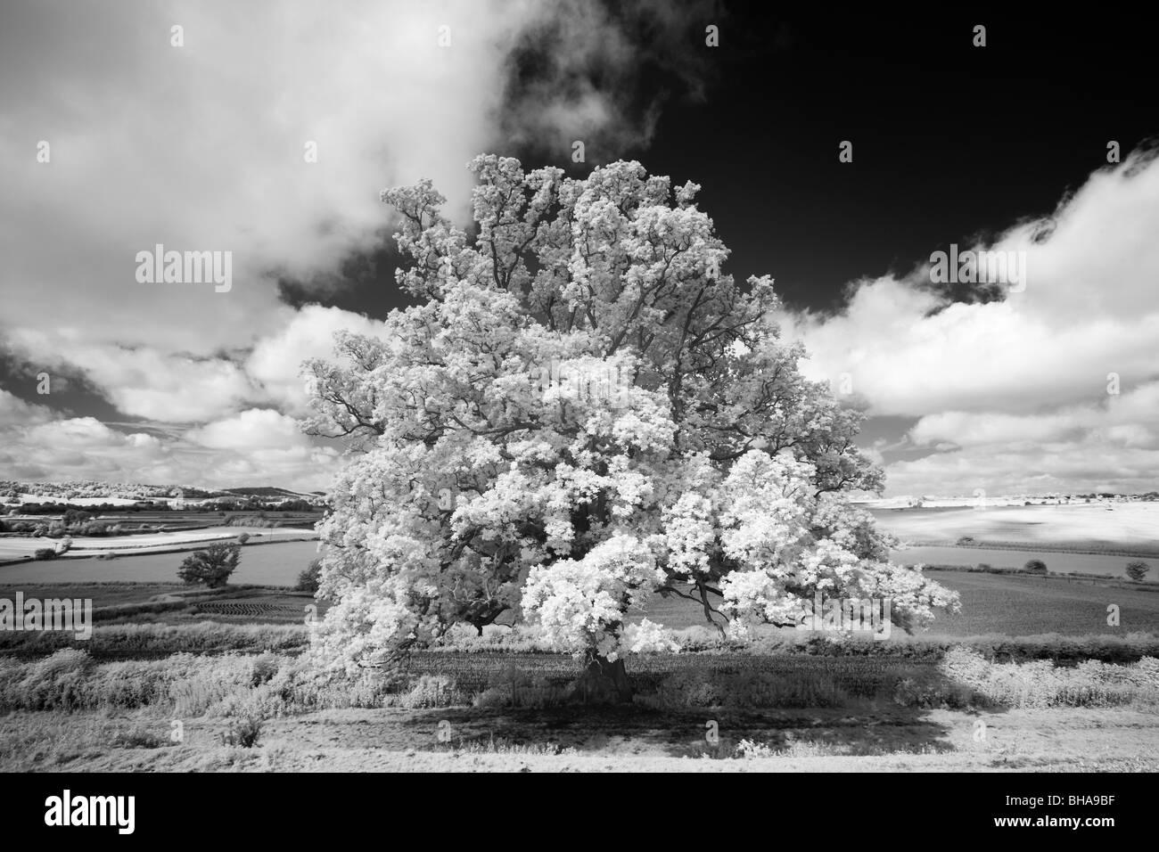 trees at Minterne Magna, Dorset, England, UK - Stock Image