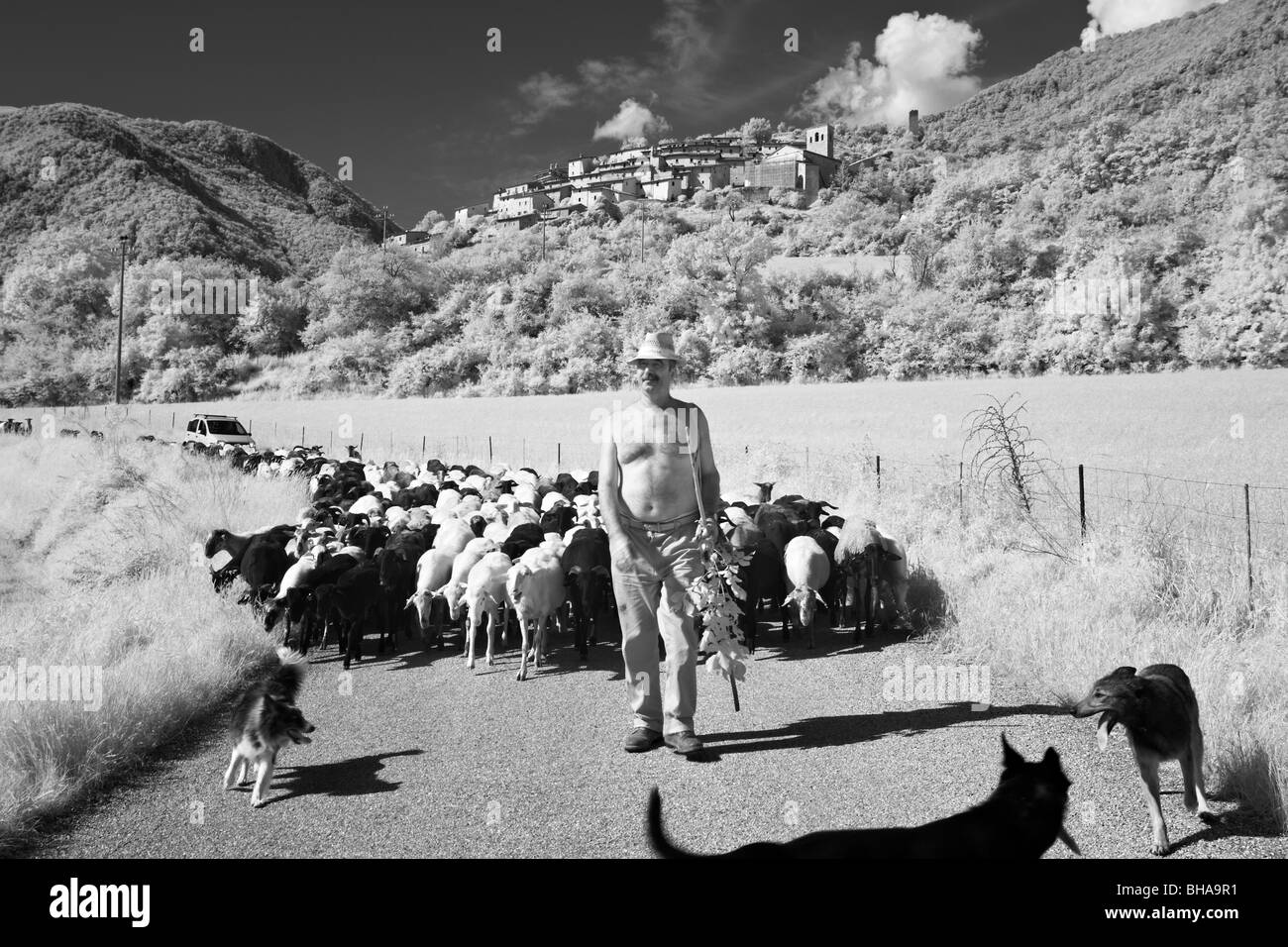 Santino, an Umbrian shepherd with his flock at Campi, Umbria, Italy - Stock Image
