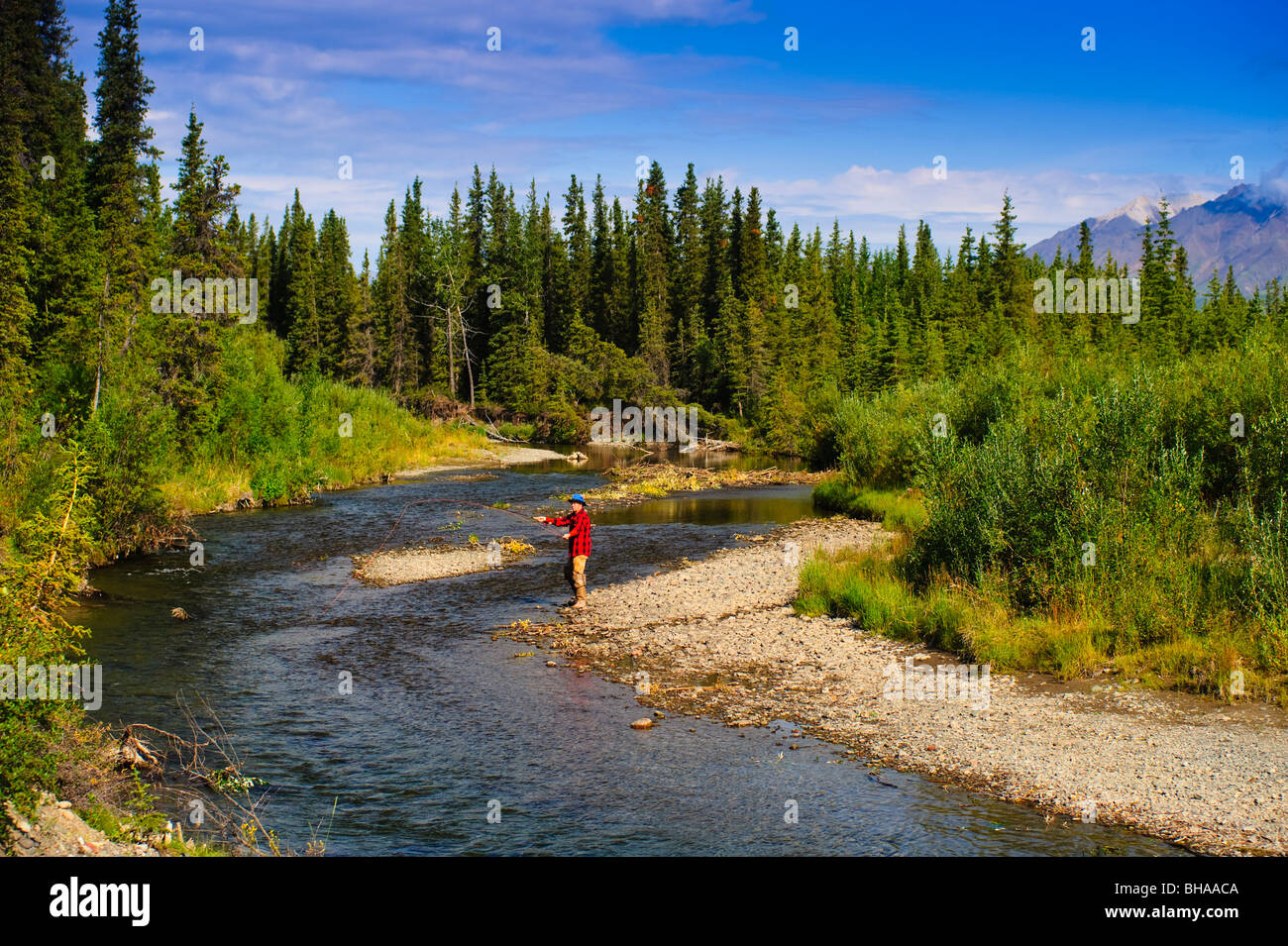 Man fly fishing for grayling, Jack Creek, Wrangell Saint Elias National Park, Southcentral Alaska, summer - Stock Image