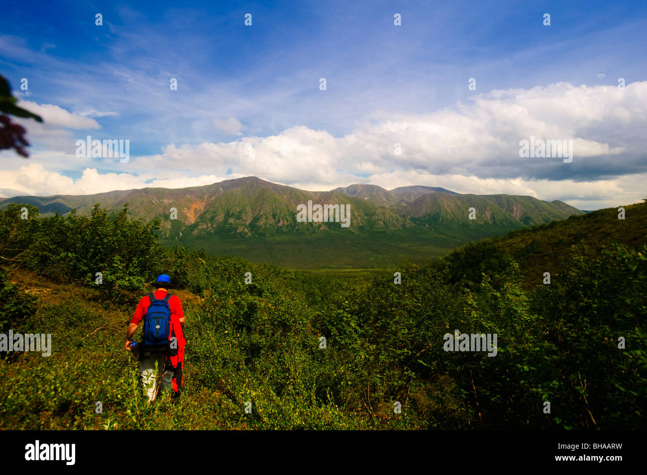 Male hiker on the Skookum Volcano Trail, Wrangell Saint Elias National Park, Southcentral Alaska, Summer - Stock Image