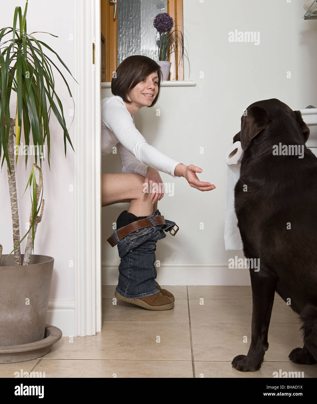 Shot of a 30s Woman in the Bathroom and Dog Bringing the Toilet Roll - Stock Image