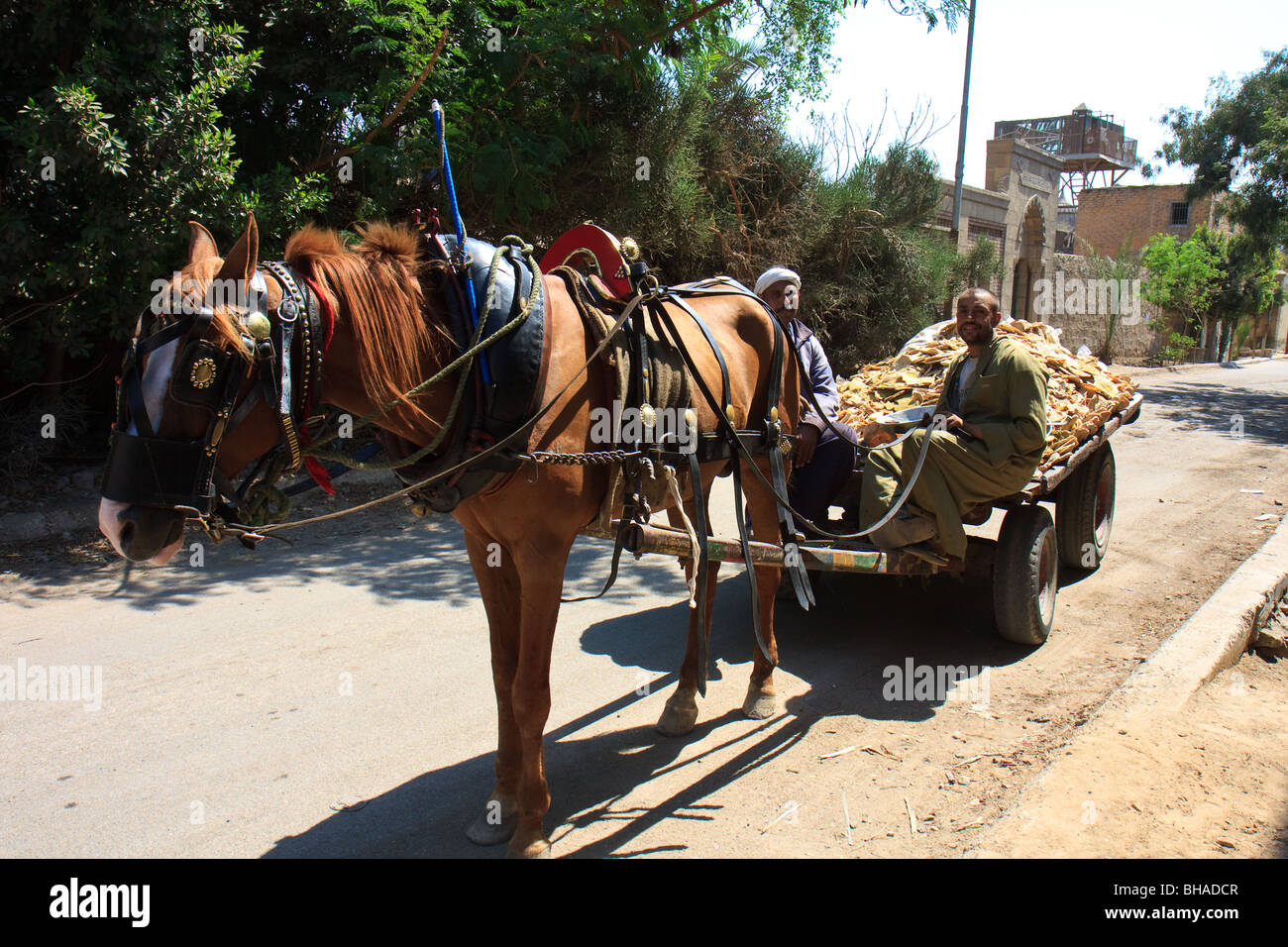 Africa Cairo Egypt Horses Northern Cemetery Police - Stock Image