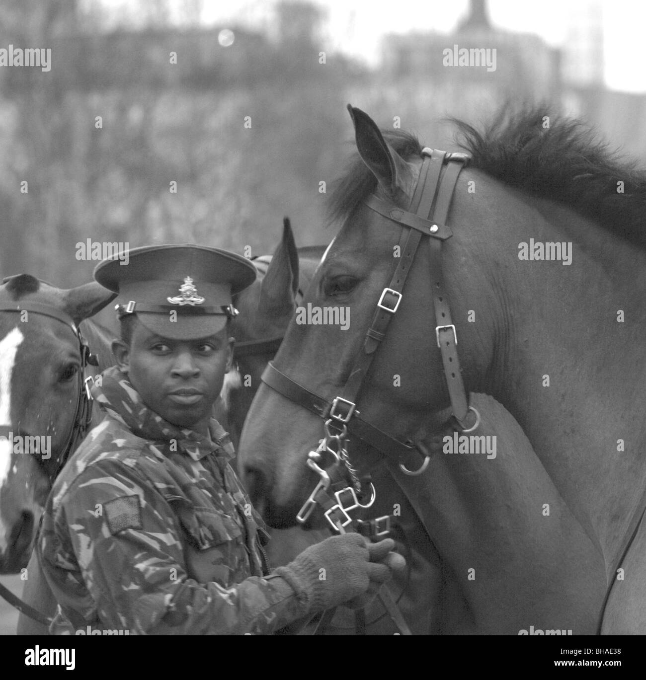 King's Troop Royal Horse Artillery England army - Stock Image