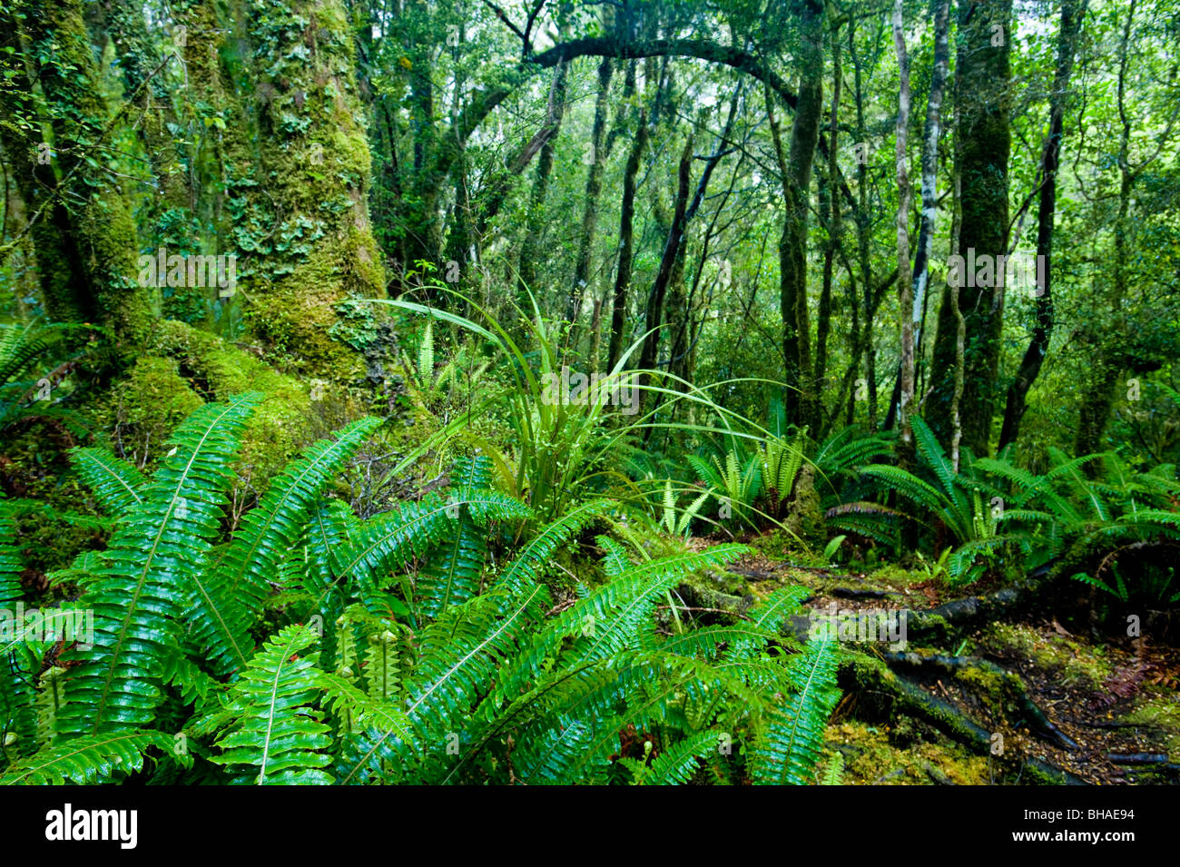 Tutoko Valley, Fiordland National Park, South Island, New Zealand - Stock Image