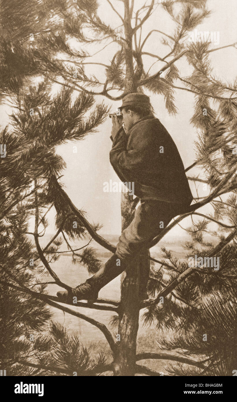 A French observer up a tree during First World War. - Stock Image