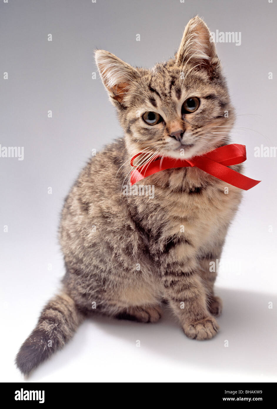 Kitten with red bow - Stock Image
