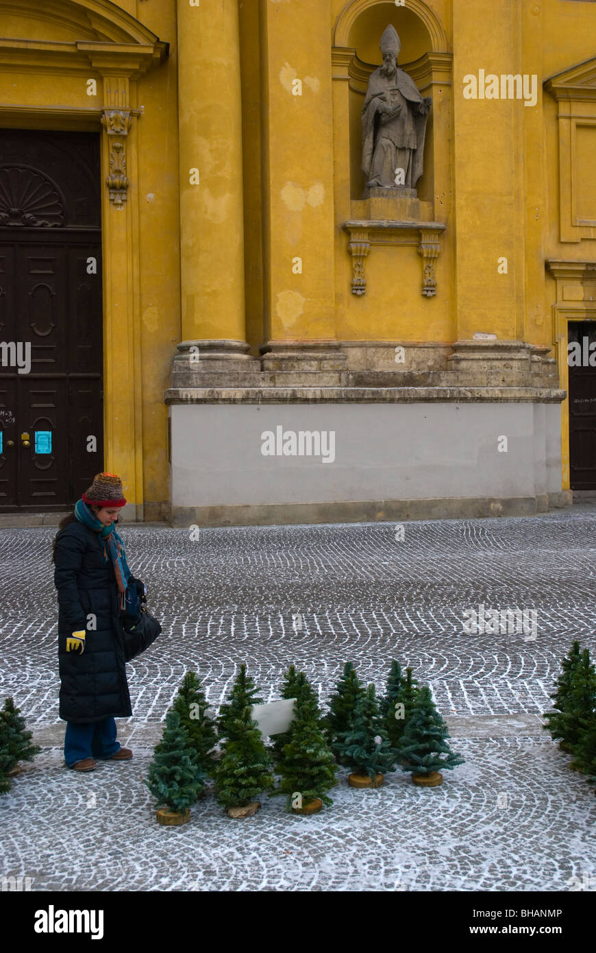 Small christmas trees for sale at Odeonsplatz square Munich Bavaria Germany Europe - Stock Image