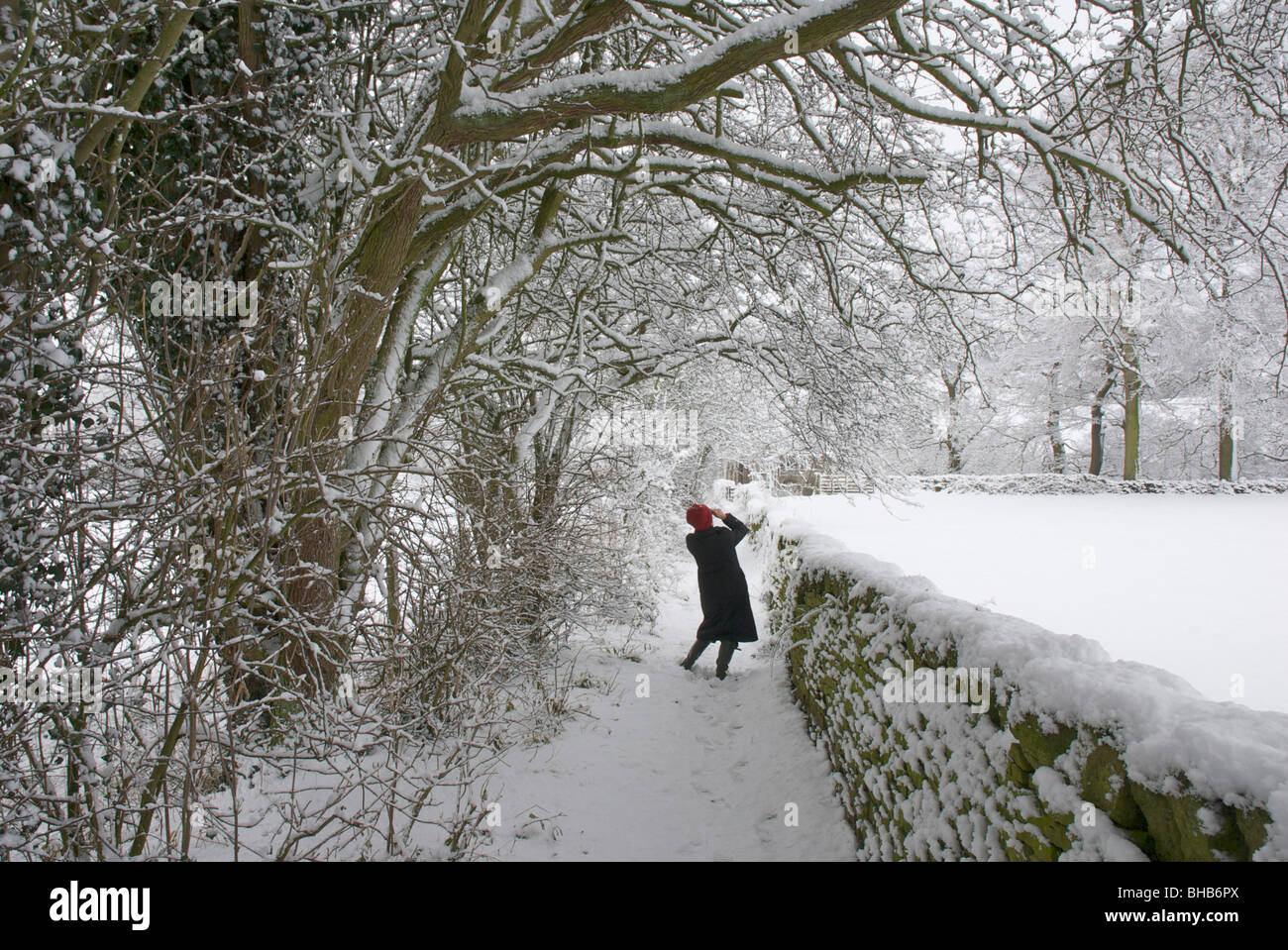 Woman taking a photograph on snowy path near Bolton Abbey, Wharfedale, North Yorkshire, England UK - Stock Image