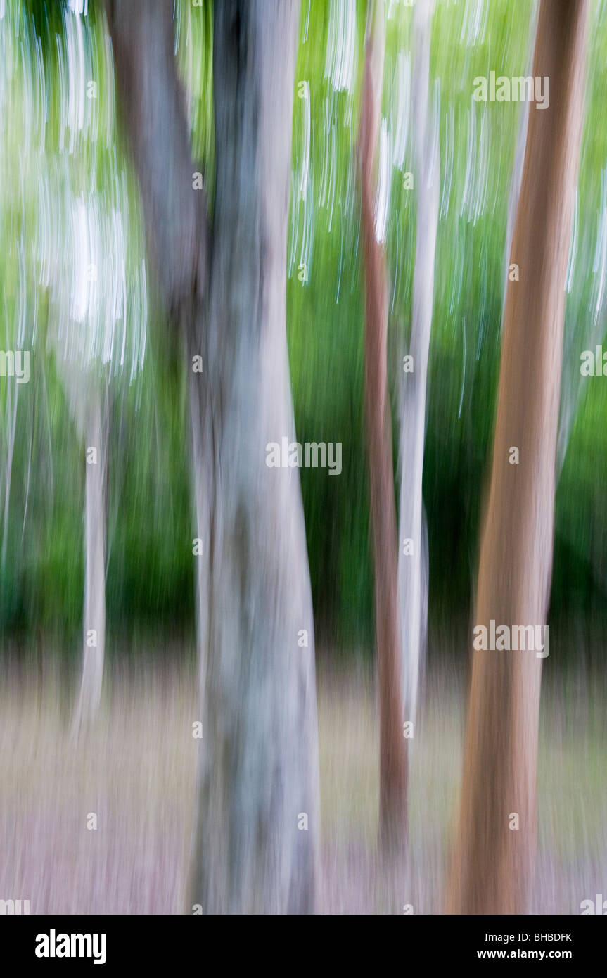 Rainforest Tree trunk abstract, Calakmul Biosphere Reserve, Yucatan MEXICO - Stock Image