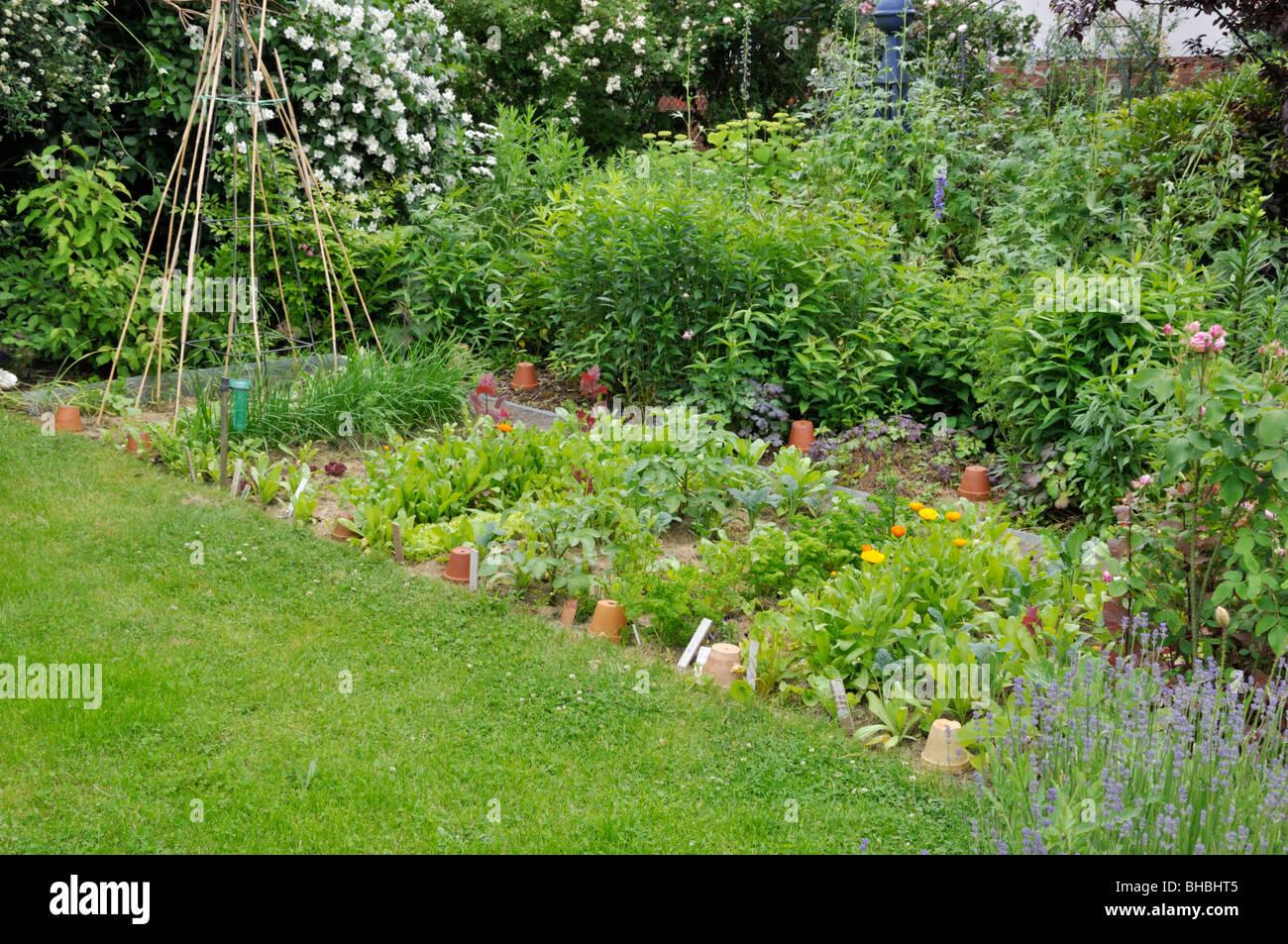 Vegetable garden - Stock Image