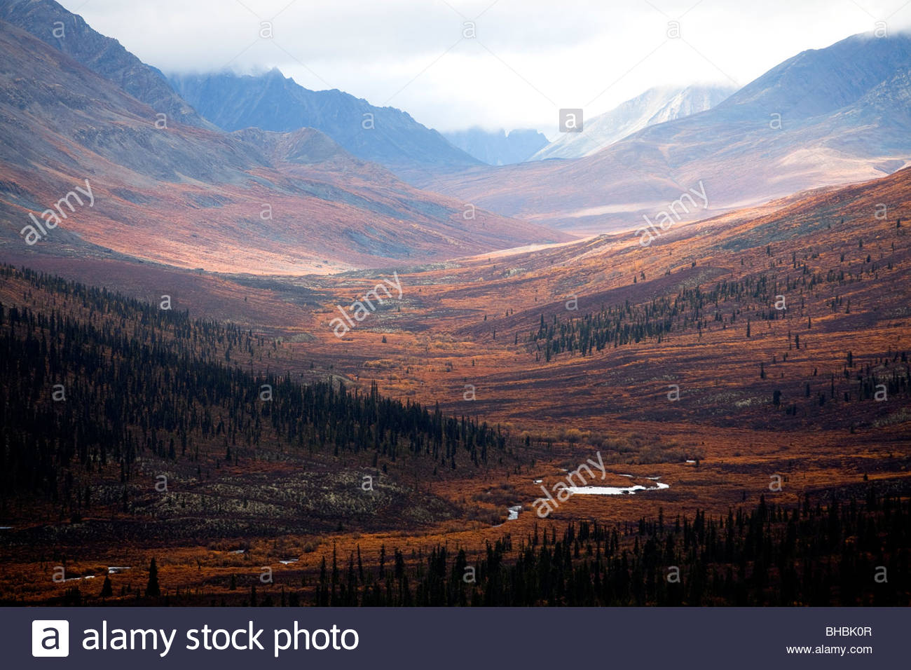 Canada canadian Dempster Highway Indian summer, leave; leaves; yellow; autumn nature scenic The Yukon Territory - Stock Image