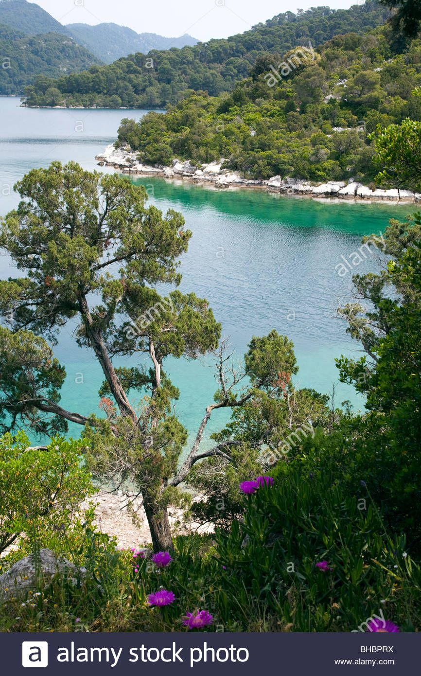 Adriatic Balkan Croatia Dalmatian Coast Europe European flora island Mediterranean Mjlet National Park nature protected - Stock Image