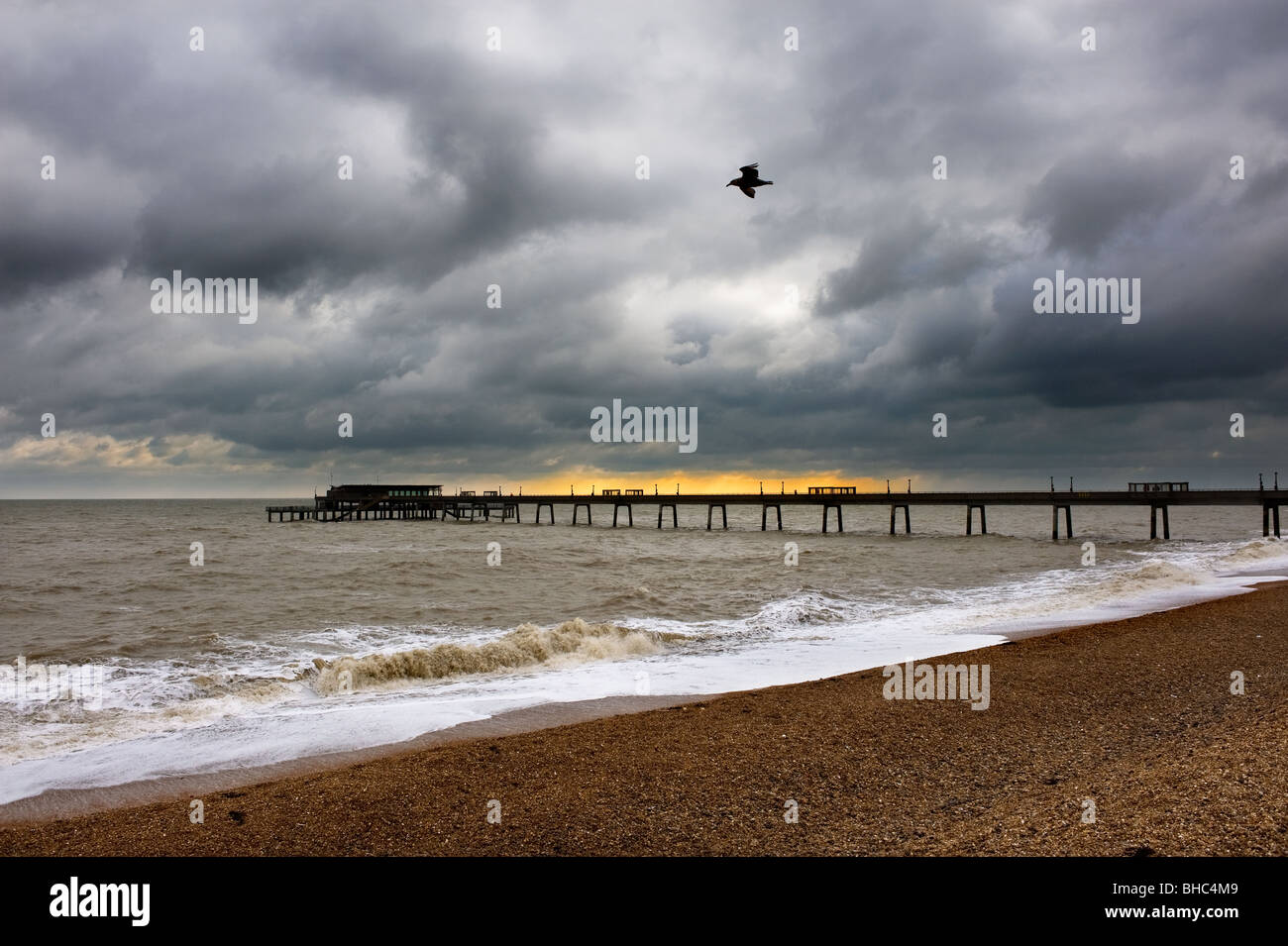 A seagull flying over the beach near Deal Pier in Kent.  Photo by Gordon Scammell - Stock Image