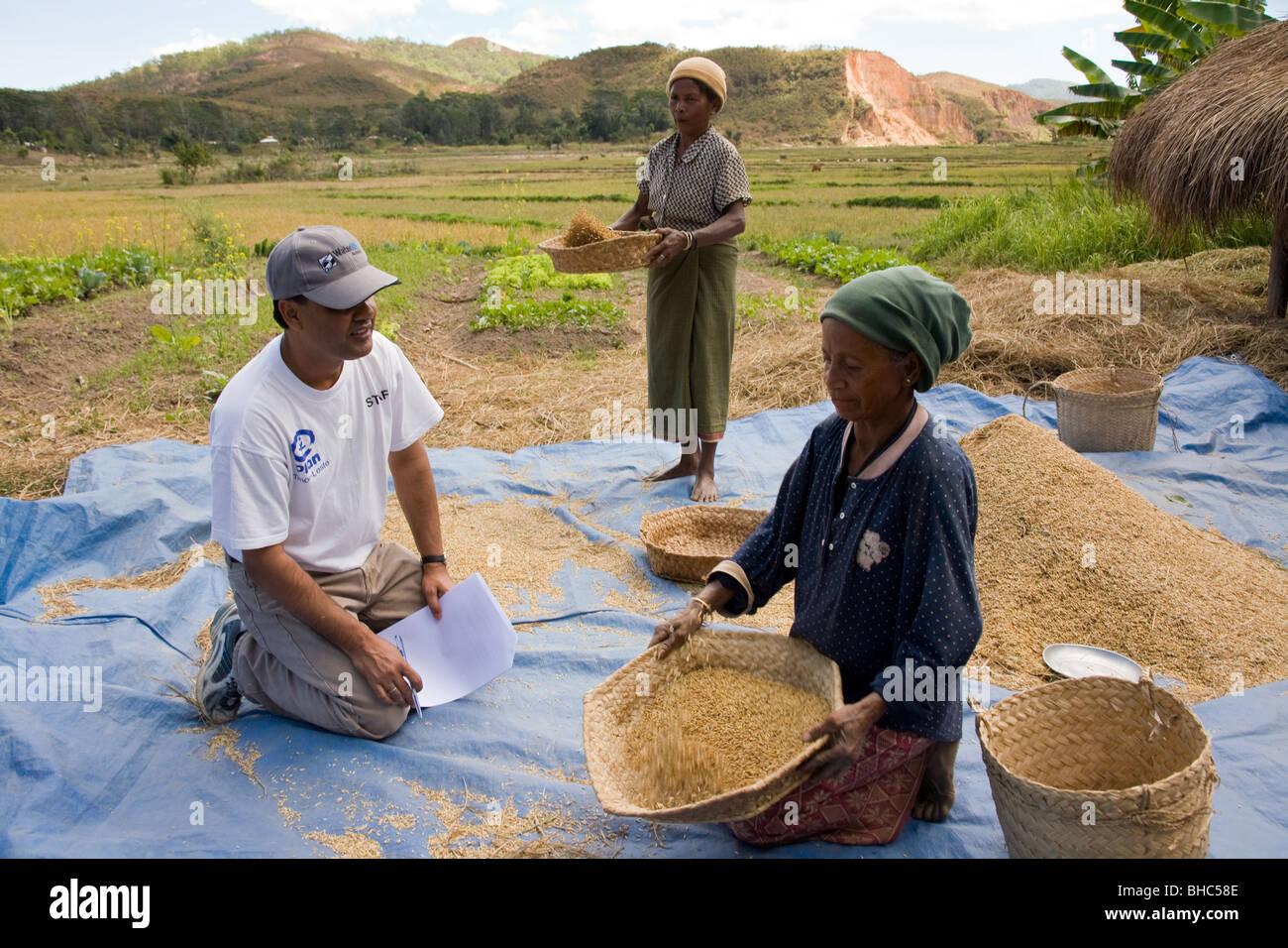 Elcolbere village hard-working women farmers Maria Moniz & Domingues da Silva sort and glean their rice and - Stock Image