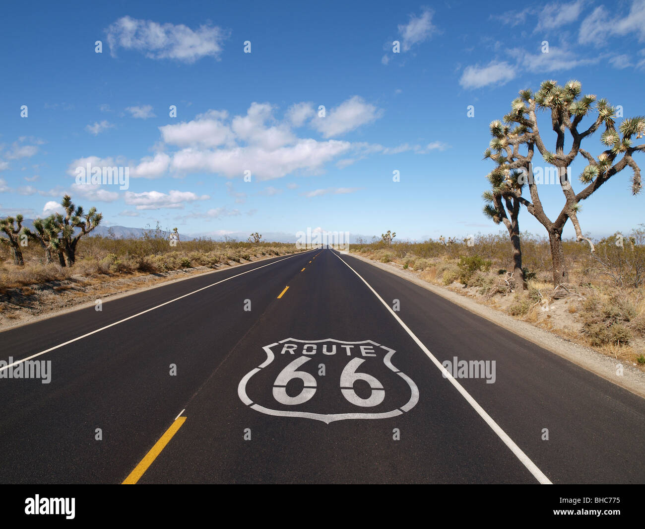 Route 66 pavement sign with Joshua Trees in Southern California. - Stock Image