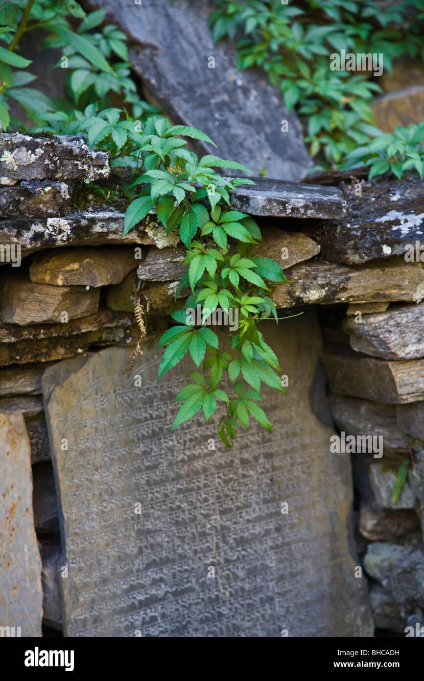 TIBETAN BUDDHIST SCRIPTURE is carved into a MANI STONE in the NUPRI DISTRICT - AROUND MANASLU TREK, NEPAL - Stock Image