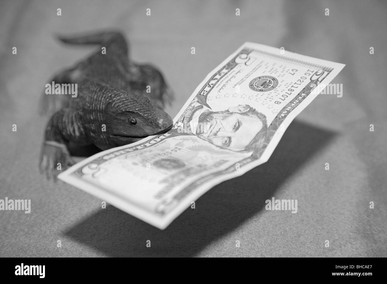 Wooden komodo dragon lizard souvenir carving biting US five dollar bill currency bank note in it's mouth - Stock Image