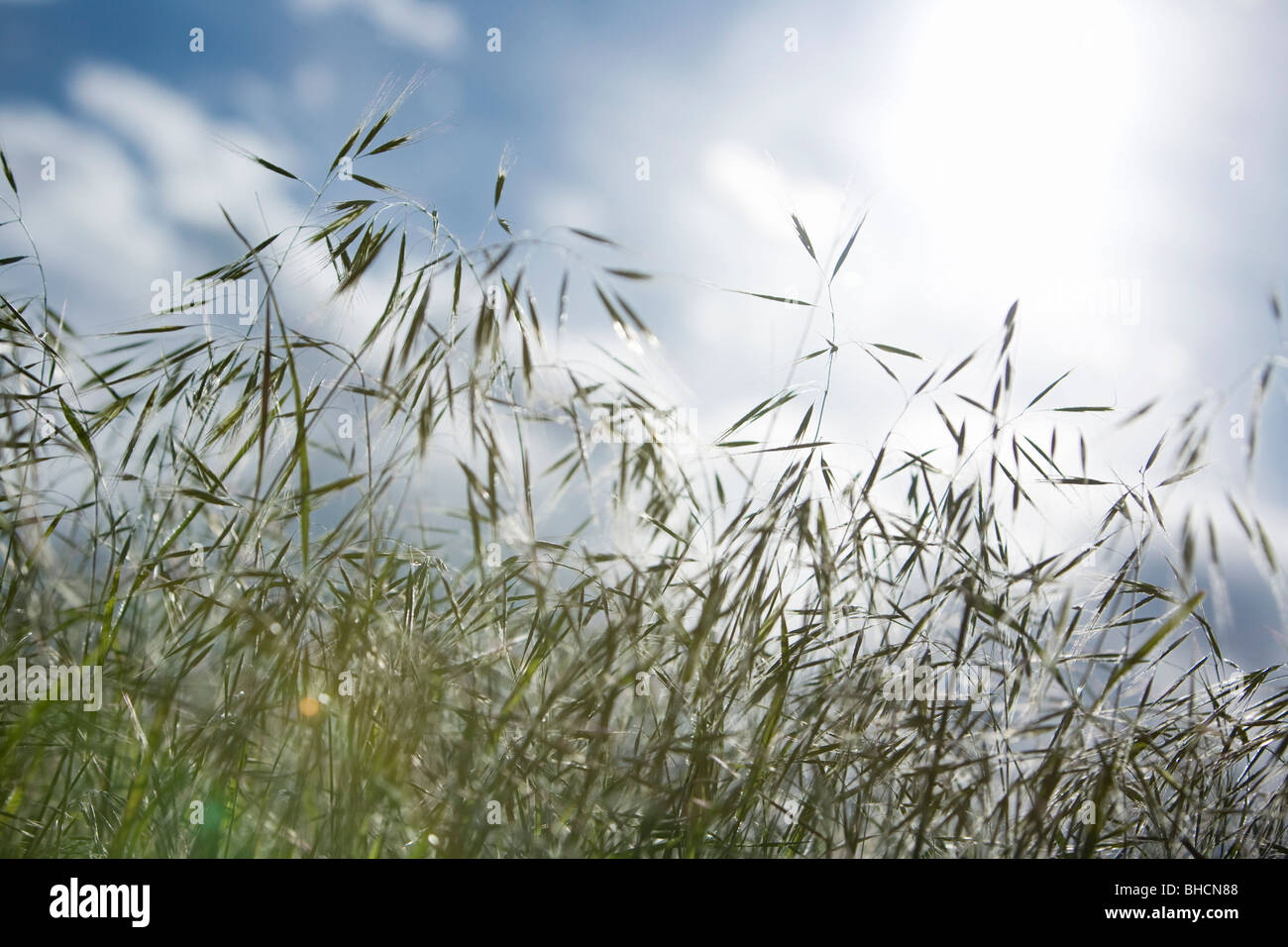 Grass with sky - Stock Image