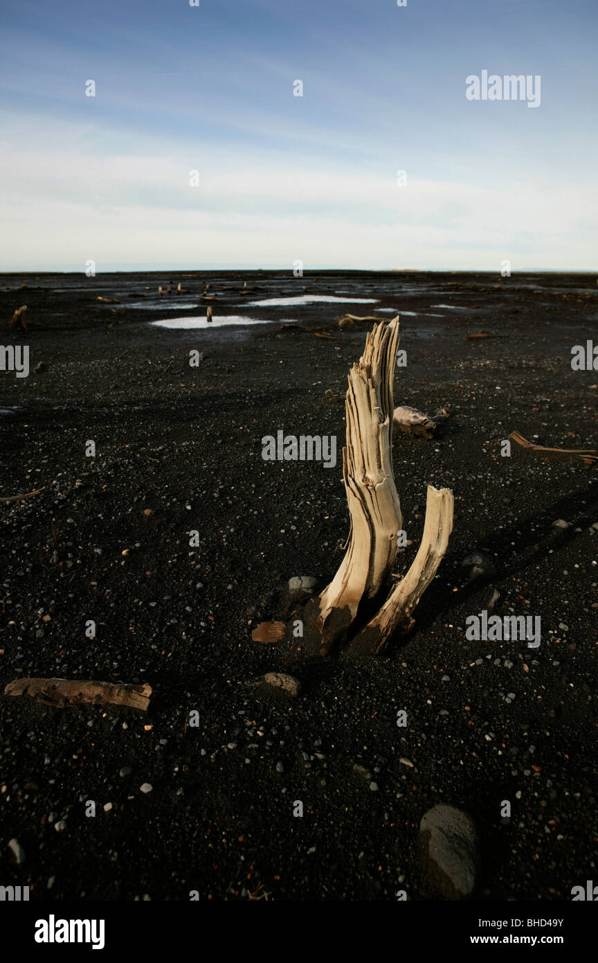 Wood remnants from catastrophic floods, Markarfljotsaurar outwash plains, Iceland - Stock Image