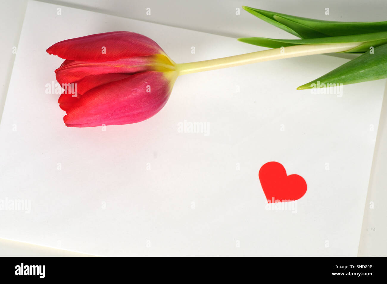 Valentine letter with tulip - Stock Image