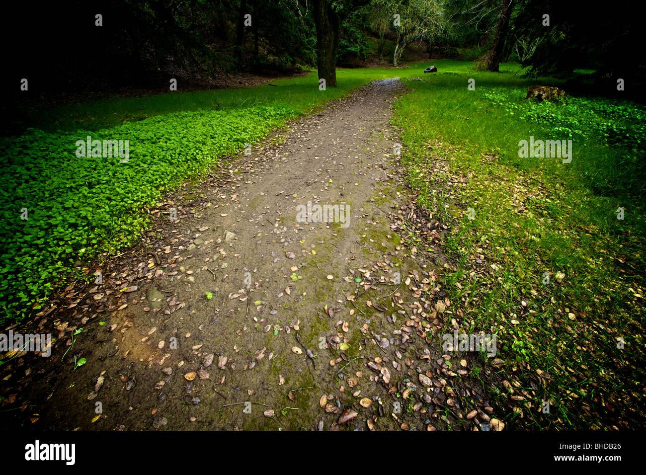 A dirt trail in Alum Rock Park, San Jose, CA - Stock Image