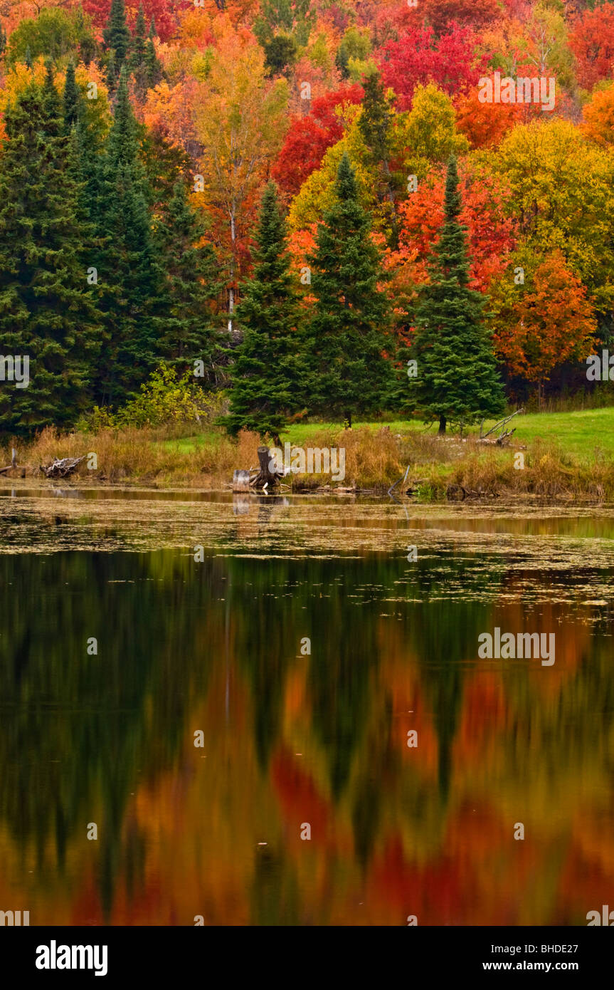 Spruces and autumn reflections in beaverpond, Elliot Lake, Ontario, Canada - Stock Image