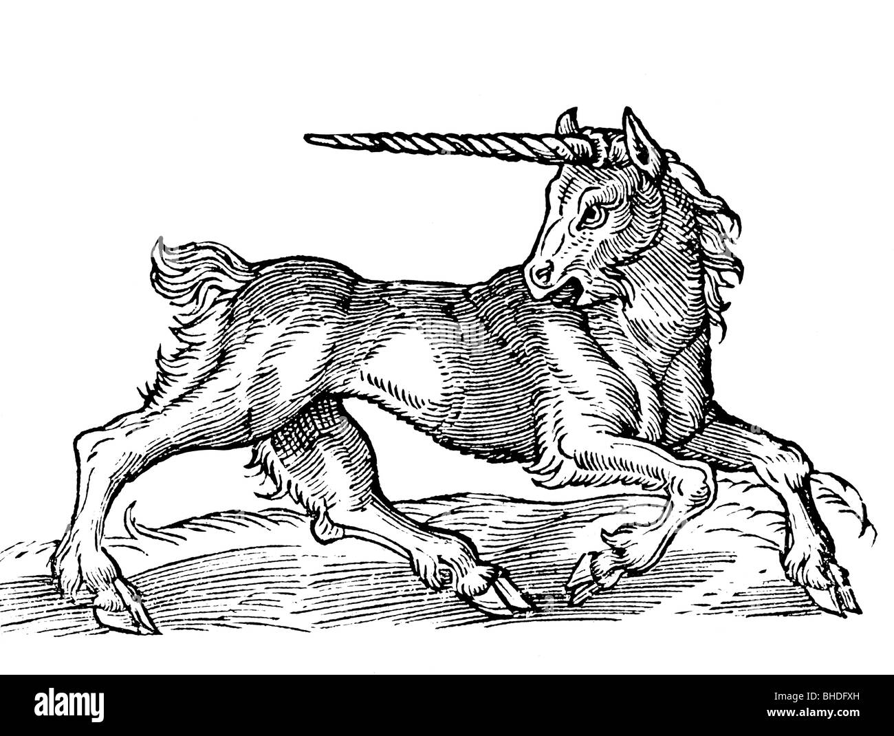 superstition, mythical creatures, unicorn, woodcut after illustrations from the 16th century, historic, historical, - Stock Image