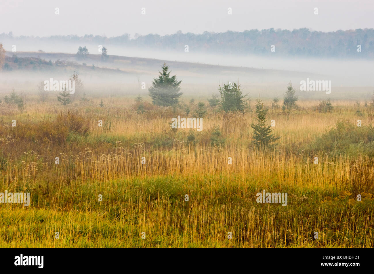 Morning mists in meadow with spruces and grasses, Greater Sudbury, Ontario, Canada - Stock Image