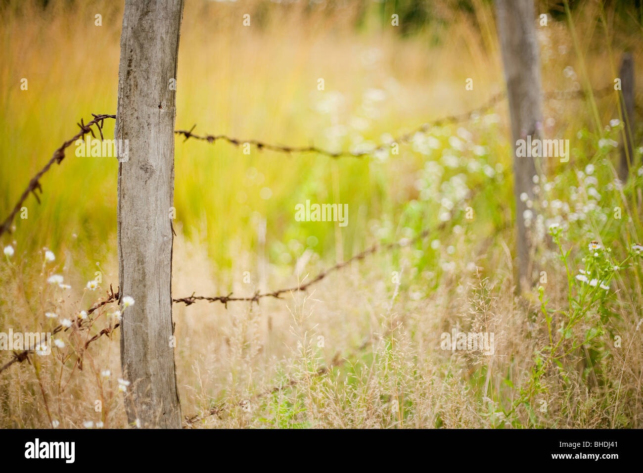 Fence made of poles with barbed wire - Stock Image