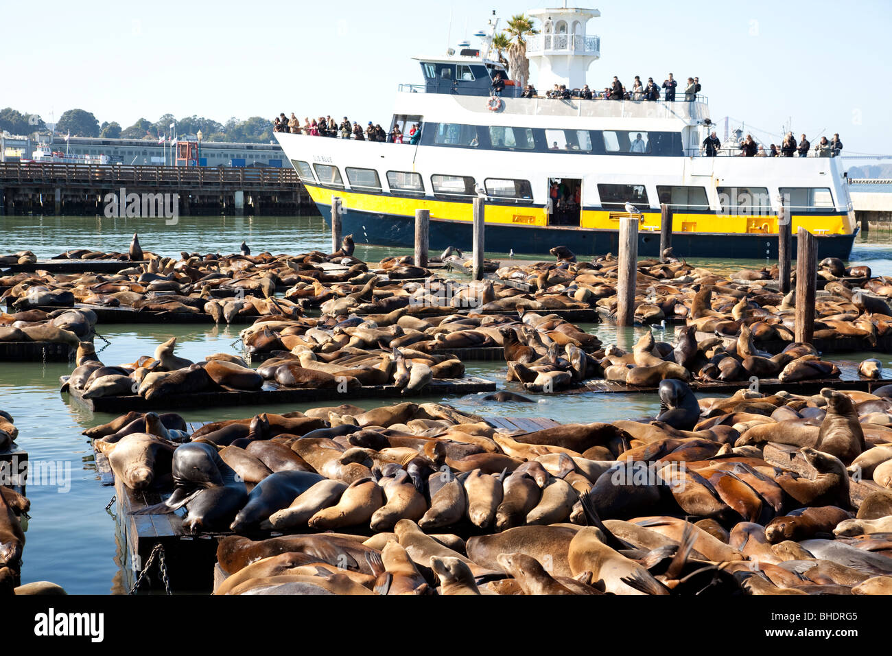 Tourist boat and Sea Lions at the famous Pier 39 - Stock Image