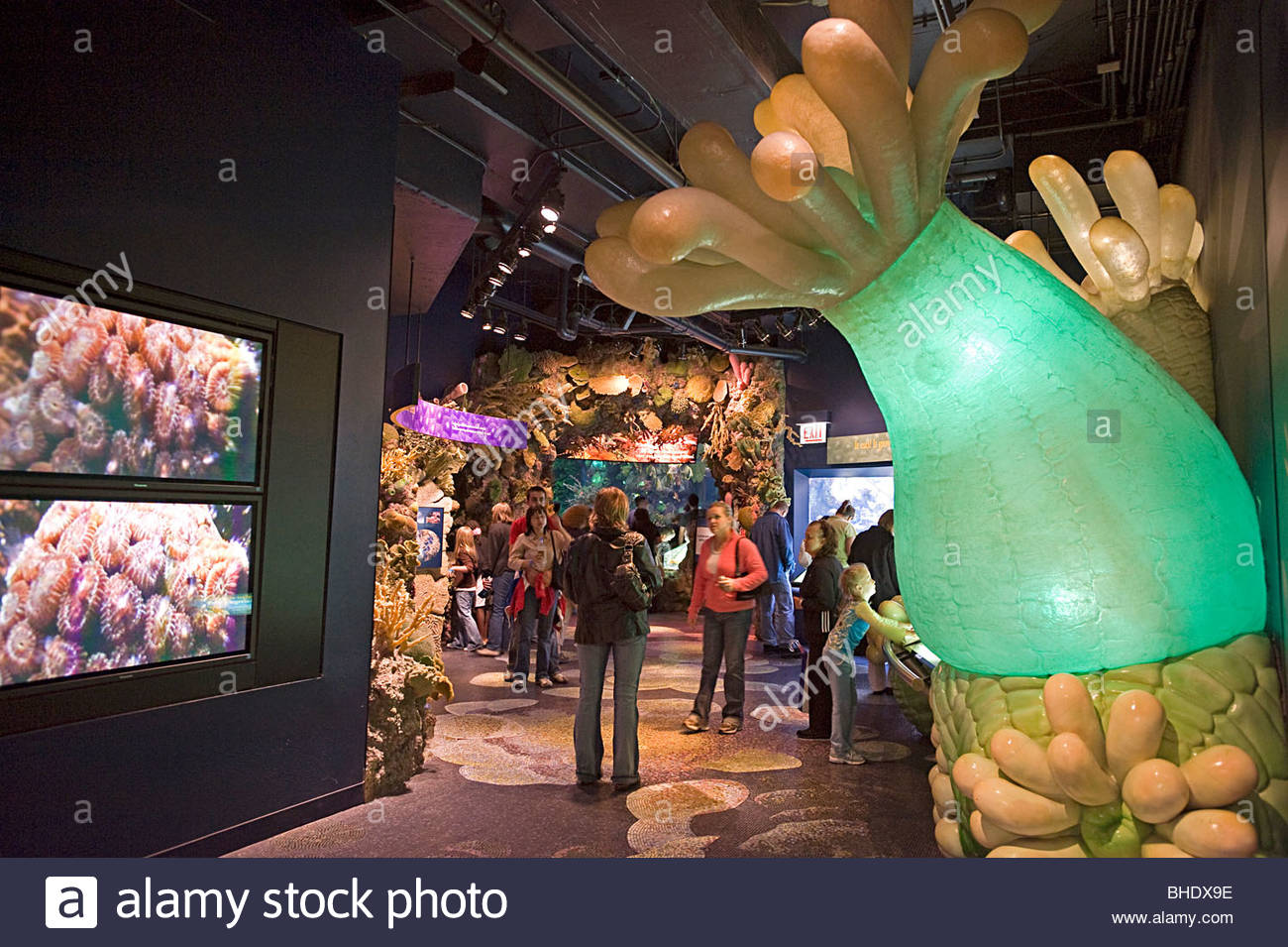 The Shedd Aquarium. Chicago, Illinois, usa - Stock Image
